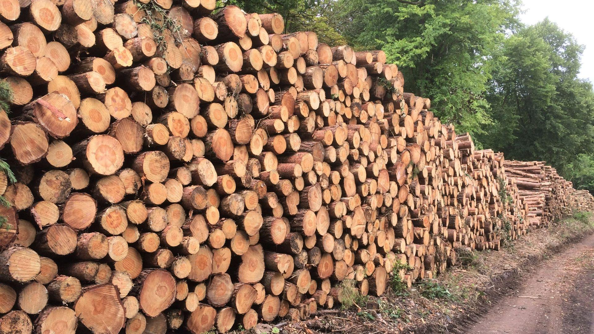 Landscape construction maydencroft limited for Landscape limited