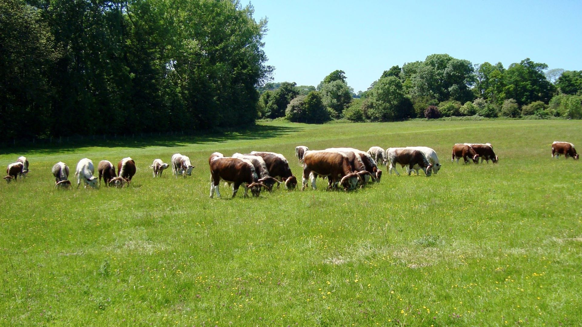 Our conservation grazing service