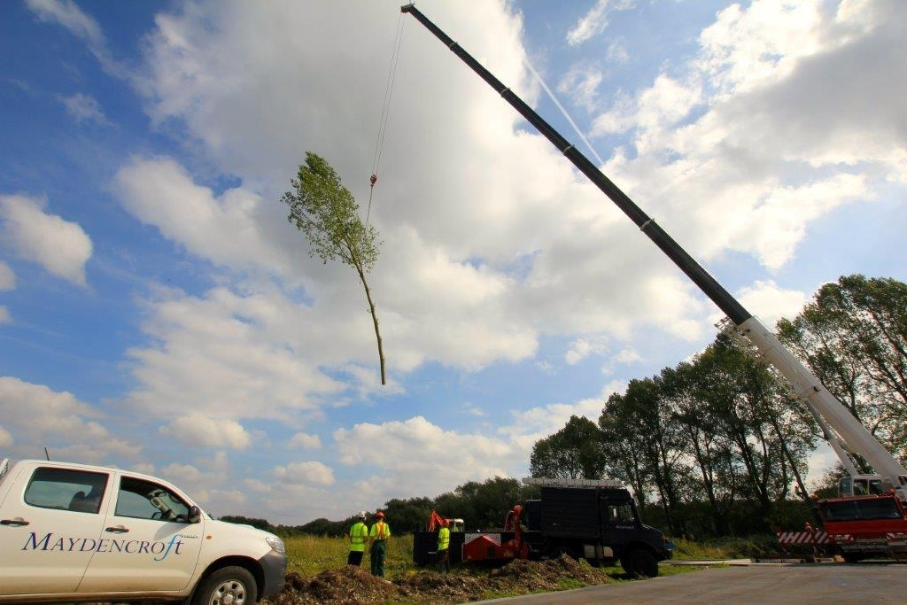 Springwell Lake: Tree safety works