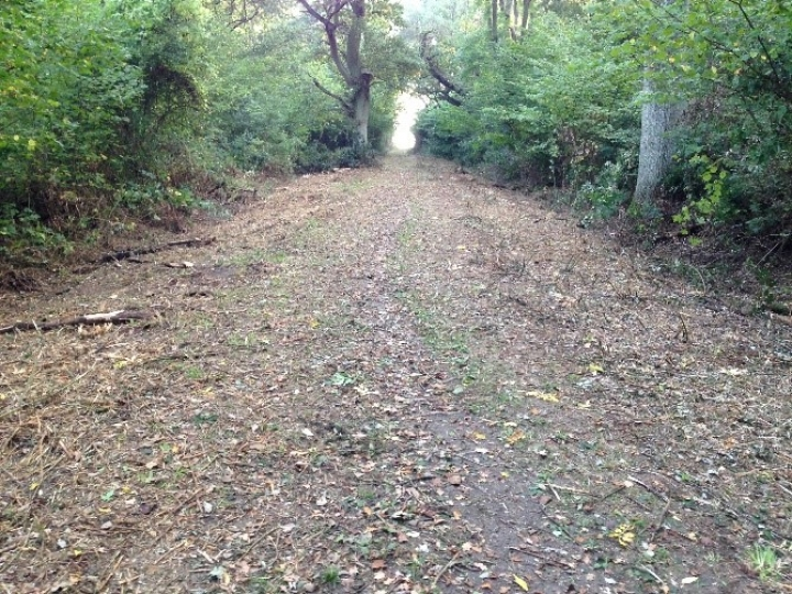 Estate Maintenance: The Woodland Trust